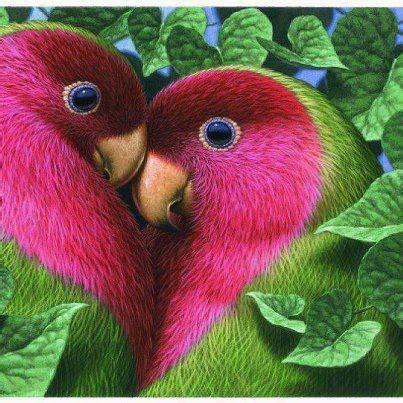 imagenes muy bonitas de animales imagenes animales bonitas imagui