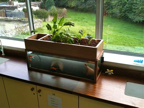 backyard aquaponics system this diy aquarium grows vegetables and waters itself here