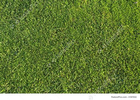 image pattern grass plants grass pattern stock picture i1597832 at featurepics