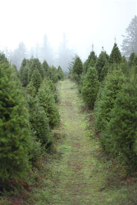 best 25 christmas tree farms ideas on pinterest