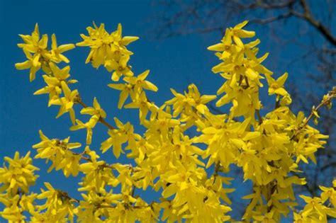 fiori di co primaverili i fiori di marzo la primavera si sveglia