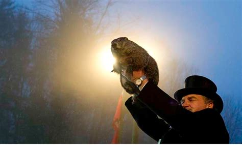 groundhog day live groundhog day 2017 live groundhog