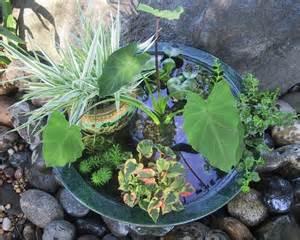 Water Garden Design Ideas 30 Surprising Indoor Water Garden Ideas
