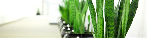 interesting indoor plants indoor plant interesting ideas about indoor plant stands