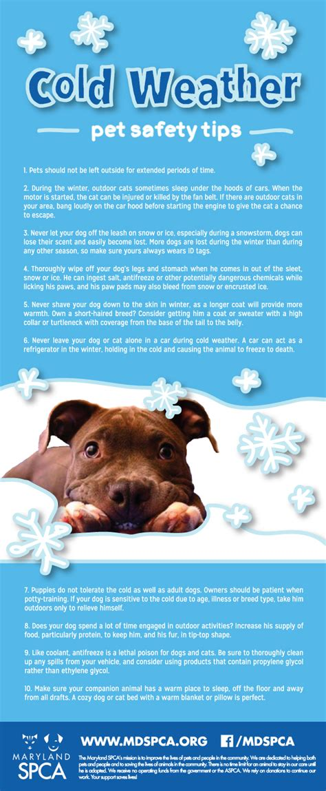 house temperature for dogs in winter cold weather dog safety tips dog breeds picture