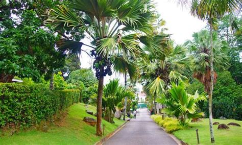 National Botanical Gardens 5 Most Talked About Places In Seychelles Afro Tourism