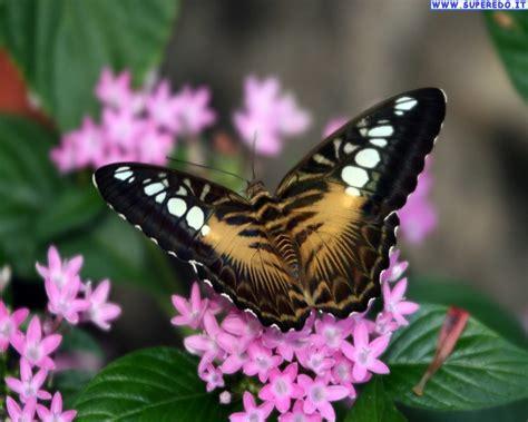 sfondi desktop fiori e farfalle quel che il sole 232 per i fiori i sorrisi sono per l umanit 224