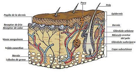 imagenes sensoriales termicas los sentidos