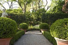gardenias hedges  boxwood hedge  pinterest