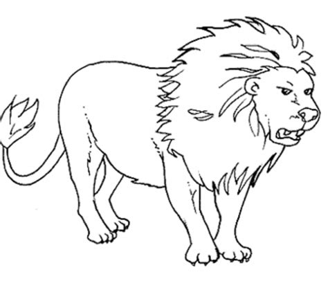 Animal Coloring Pages For To Print Out by Animal Outlines For Colouring Outline Pictures Of Animals