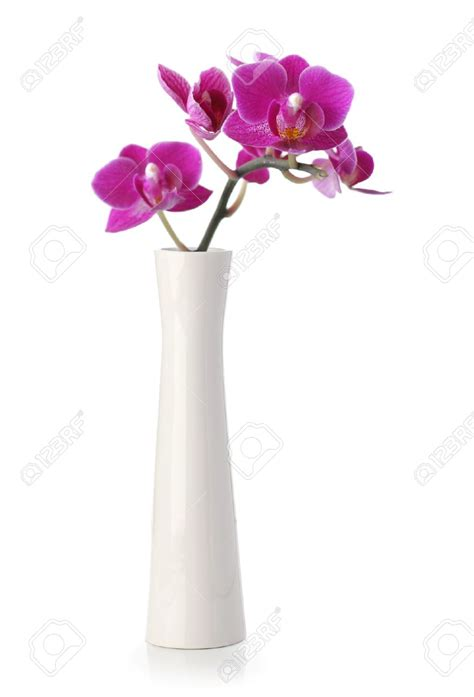 Vase And Flowers by Vases Design Ideas White Flower Vase Ideas White