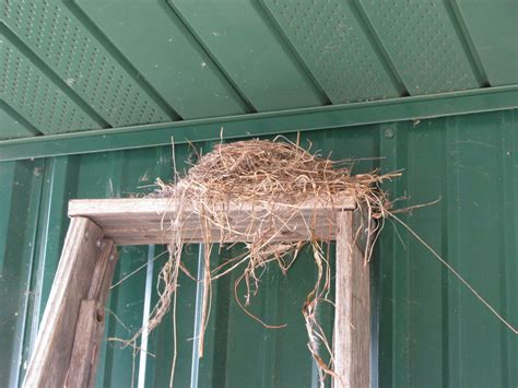 far side of fifty robin s nest