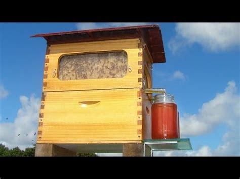 shelton honey bee audio only honey bee