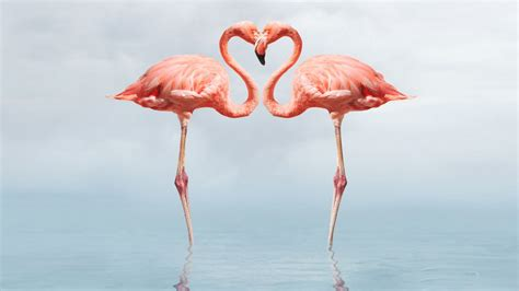 flamingo wallpaper black and white flamingo full hd wallpapers 1080p wallpapers13 com