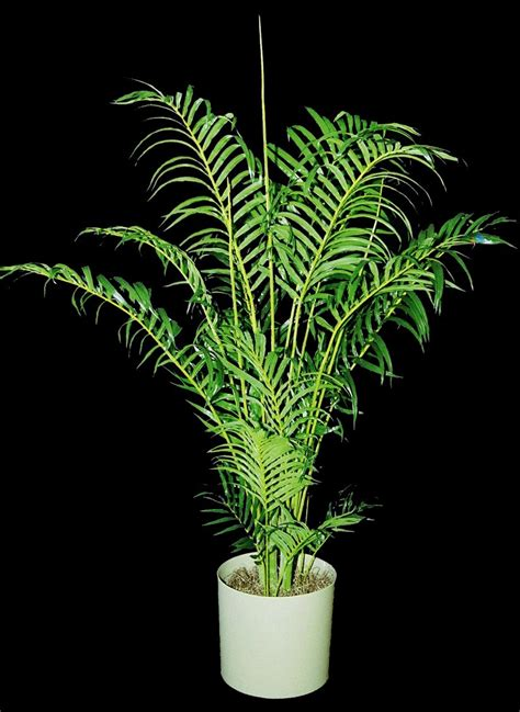artificial plants plant care