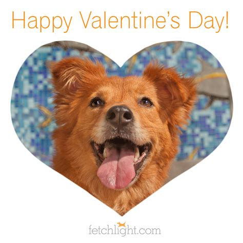 valentines day ideas san diego happy valentine s day to san diego dogs and cats 187 fetchlight