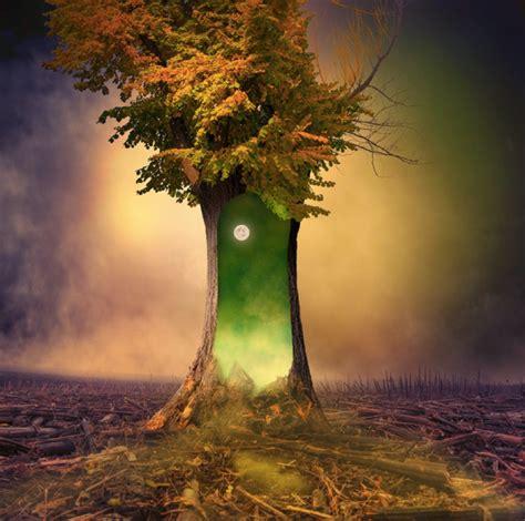 magic tree the magic tree