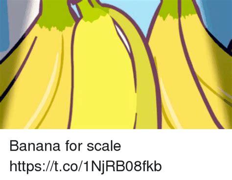 Banana For Scale Meme - banana for scale httpstco1njrb08fkb banana meme on sizzle