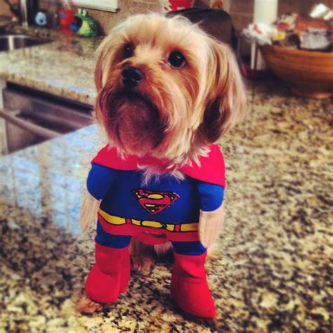 dogs in clothes pictures of dogs in clothes pet photos gallery 5ol20mw3on