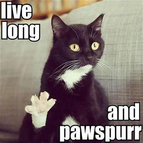Cat Birthday Memes - live long and pawspurr funny happy birthday meme