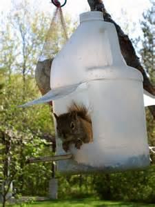 diy squirrel feeder birds and squirrels