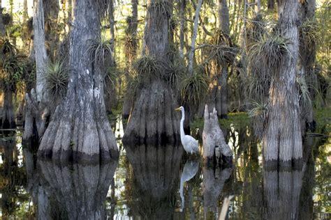 service florida florida gov promises 5 billion for everglades preservation