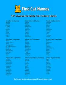 101 male cat names ideas find cat names