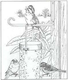 coloring pages of bird feeders 1000 images about kleuren on pinterest coloring for