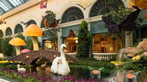 botanical gardens in las vegas top 10 things to do in las vegas will you to change