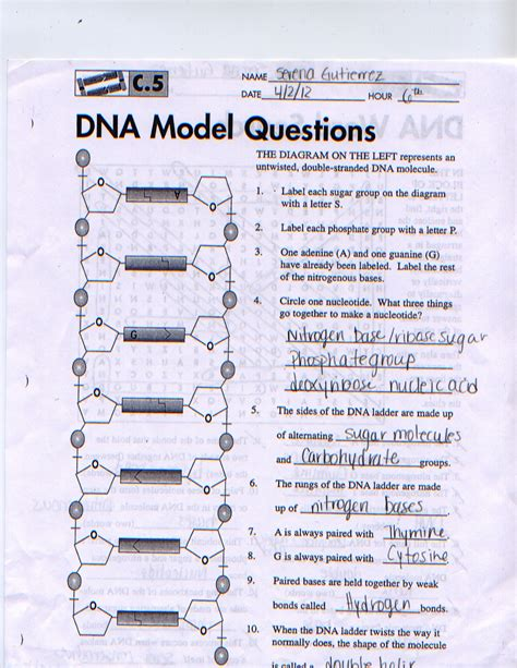 Dna The Helix Worksheet Answers by The Dna Helix Coloring Worksheet Answers
