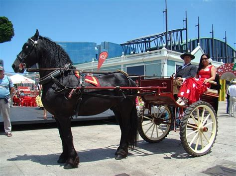 httpgozando mujer y caballo 17 best images about de caballos y mujeres on pinterest