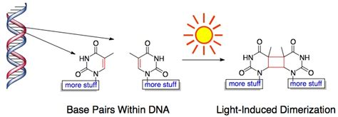 Uv Light Damages Dna By Causing by Days And The Chemistry They Cause I Can Has Science