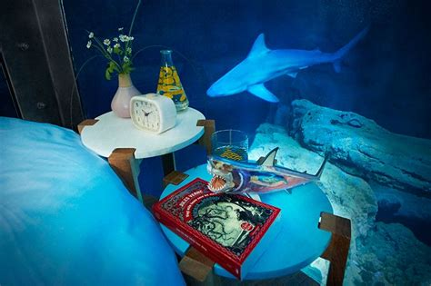 airbnb nightmare airbnb shark tank bedroom is a dream or nightmare come