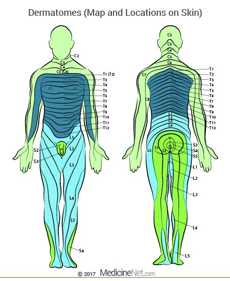 dermatomes map cervical lumbar dermatomes map of lower leg limbs