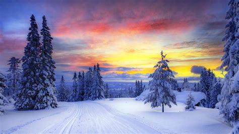 imagenes invierno para fondo pantalla invierno arboles nieve cielo amarillo fondos de pantalla