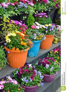 colorful flowerpots on display stock photo image 30641960