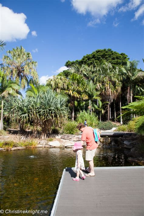 Mount Annan Botanical Gardens Cafe The Australian Botanic Gardens Mount Annan Melaleuca House Cafe Adventure Baby