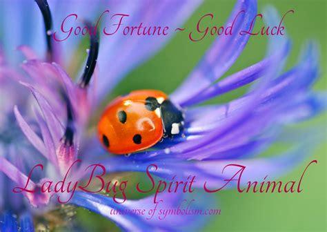 ladybug symbolism ladybug meaning ladybug spirit