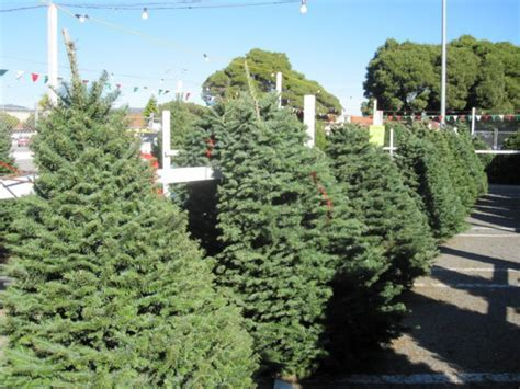 city offers free christmas tree recycling brentwood ca