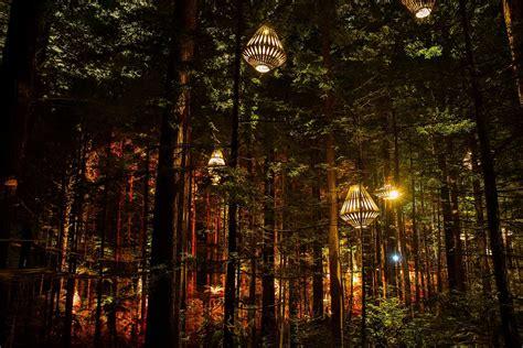 Redwood Lighting by Redwoods Nightlights Redwoods Treewalk Rotorua