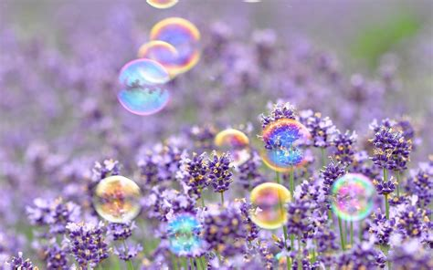 wallpaper hd for desktop full screen flower mood bubbles flower flowers purple background wallpaper