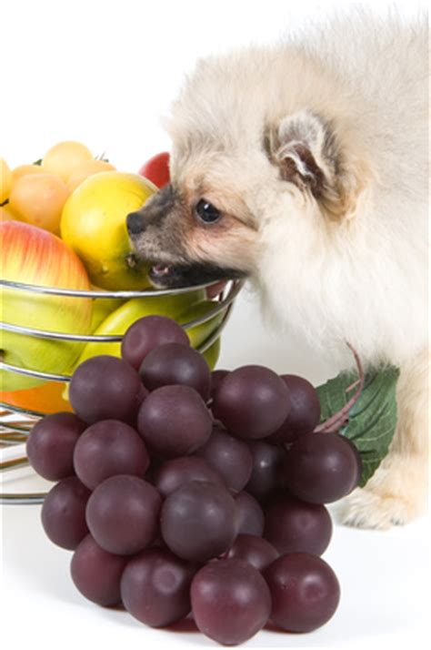 can dogs eat berries can dogs eat blueberries petfoodia