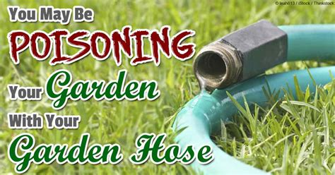 Garden Hose You Can Drink From Be Careful Your Garden Hose Is Likely Contaminating Your Food