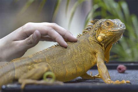 Reptile L by La V 233 T 233 Rinaire R 233 Pond Un Reptile Pour Vous Tenir