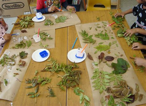 kindergarten activities nature more than a collage collage reggio and forest school