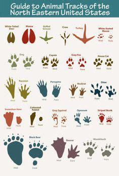 printable animal track guide 1000 images about tracks tracks tracks on pinterest