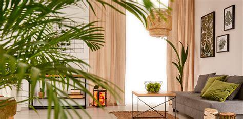 decora con plantas de interior c 243 mo decorar la casa con plantas