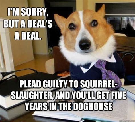 Law Dog Meme - corgi lawyer meme www pixshark com images galleries