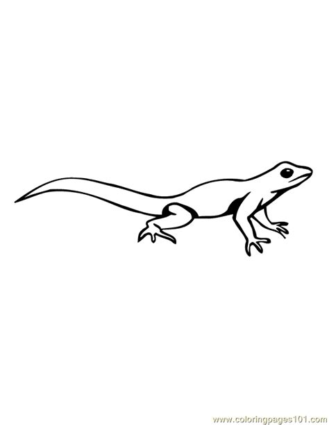 cute lizard coloring pages lizard pictures to color kids coloring
