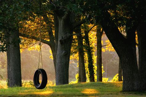 tire swing tree piedmont tree climbing ptc tree swing installation